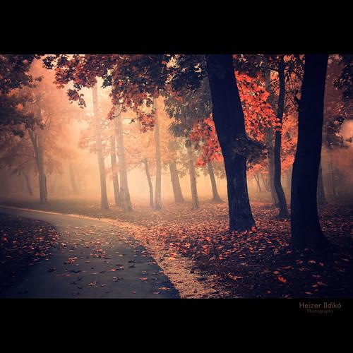 autumn trees light leaves forest woodland woods hungary természet fa táj fény köd tájkép út ősz erdő canonsx10