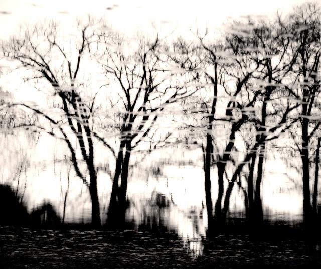 Morse's Pond