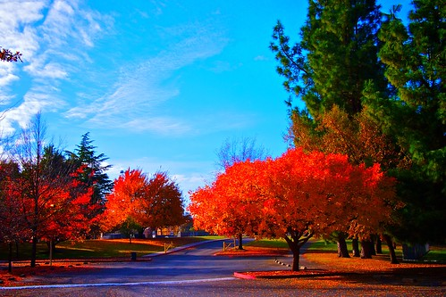 california autumn colors landscape sacramento naturesfinest coth supershot impressedbeauty flickrdiamond nejmantowicz natureselegantshots dragondaggerphoto coth5