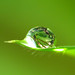 A drop of leaves on a leaf by abdul / yunir