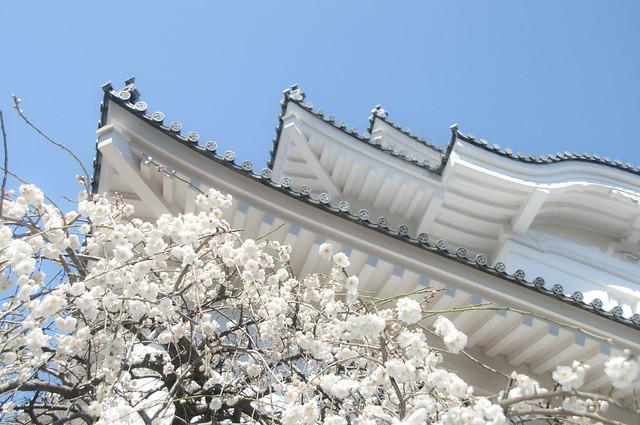大多喜城の梅