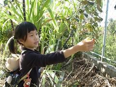 20120204-zozo想摘棗子-1