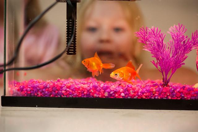 038 fish