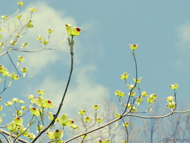 Sky Blooms