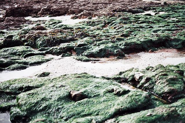 falmouth seaweed rocks
