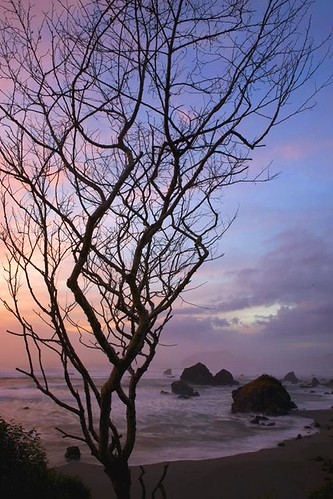 ocean trees sunset tree beach nature northerncalifornia landscape coast landscapes humboldt pacific pacificocean trinidad redwoods wilderness humboldtcounty redwoodnationalpark humboldtcoast lufenholtz