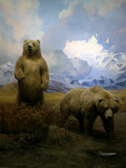 animal(1.0), polar bear(1.0), mammal(1.0), grizzly bear(1.0), fauna(1.0), bear(1.0), wildlife(1.0),