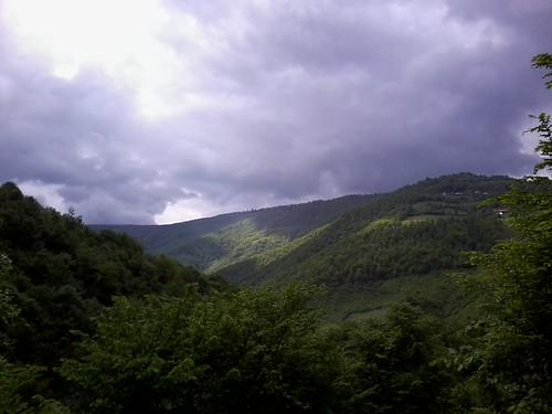cloud forest romania muntele rece