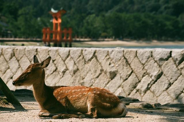 嚴島神社, 厳島神社, いつくしまじんじゃ, Itsukushima Shinto Shrine, 宮島, Miyajima, 廣島, Hiroshima