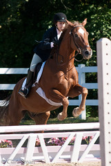 dressage(0.0), stallion(0.0), animal training(0.0), mustang horse(0.0), animal sports(1.0), equestrianism(1.0), english riding(1.0), mane(1.0), eventing(1.0), mare(1.0), jumping(1.0), show jumping(1.0), hunt seat(1.0), equestrian sport(1.0), rein(1.0), sports(1.0), recreation(1.0), outdoor recreation(1.0), mammal(1.0), equitation(1.0), horse(1.0),