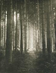 Waldlichtung, 1897, by Edouard Hannon