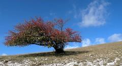 Monte Le Gronde