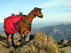 Richie - Goat Peak