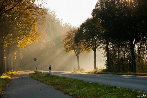 road trees germany bomen rays sunbeams duitsland weg nettetal zonnestralen noordrijnlandwestfalen bracom