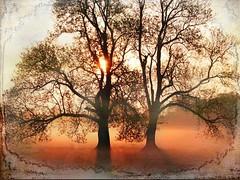 """""""Shining Tree"""""""