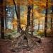 L1015722 by Carsten Ranke