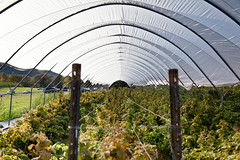 Indian Ladder Farms - Altamont, NY - 2010, Oct - 10.jpg by sebastien.barre