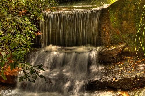 flores agua colombia hdr huila cascada sanagustin fotogrfíadigital isabelorjuela