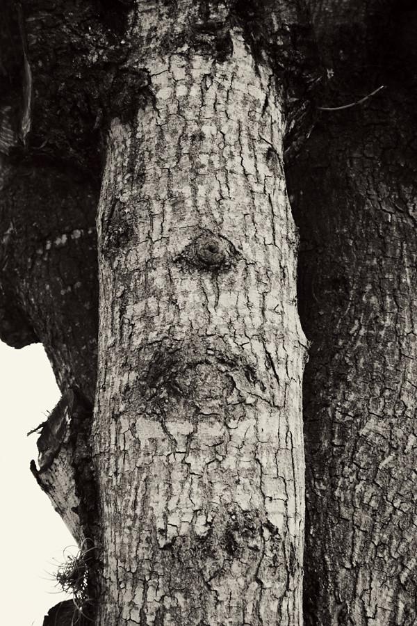 tree face 21