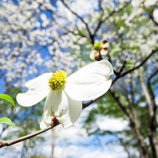 Spring in Macro-11