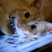 Catbook Pro by CSCreative