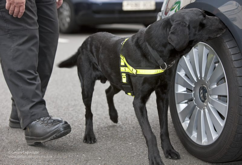 Image Result For Police Trained Dogs