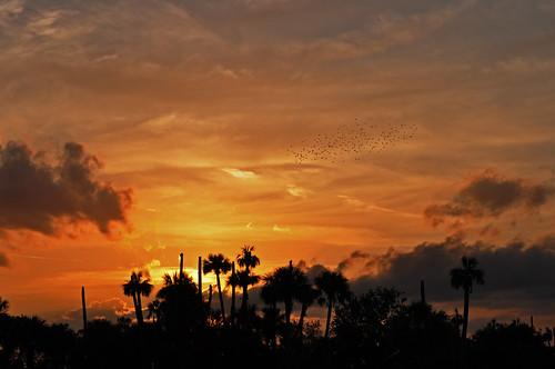 sunset nature clouds outdoors florida palmtrees
