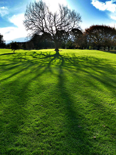 park shadow newzealand christchurch tree silhouette branches canterbury nz hagley