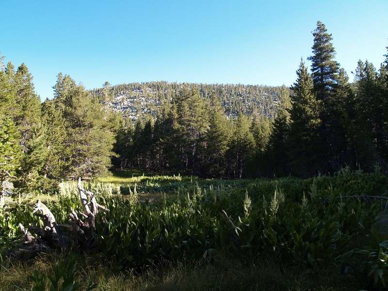 Little Round Valley - Meadow in the Morning