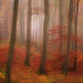 The forest of dreams II by flowerpics09