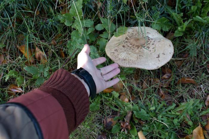 Large mushroom.