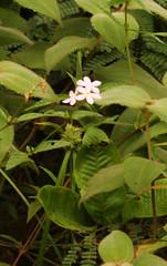 Guyana-9016