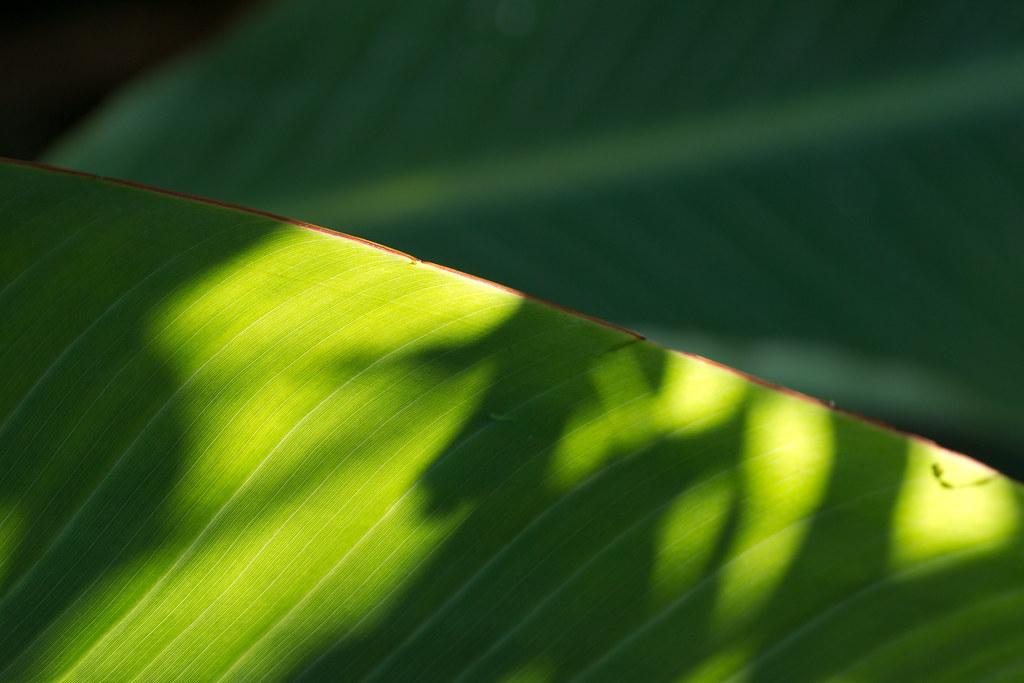 日差し 2011/11/12 P1000237
