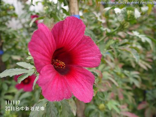 P1130397花海