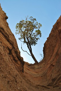 Secluded Tree Tent Rock Monument