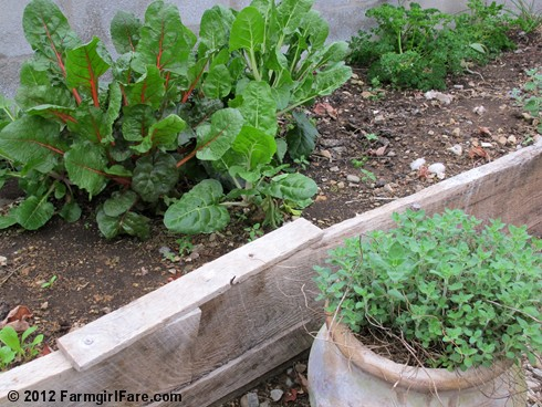 In My Kitchen Garden In The Greenhouse On The First Day Of Spring Garden Journal 3 20 12