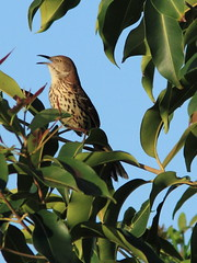 Tropical Audubon Society Field Trips