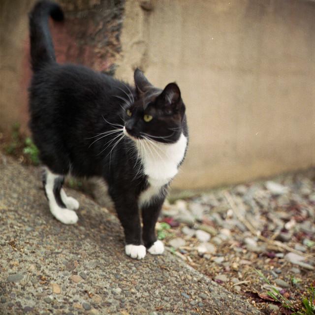 Sock Garter Cat