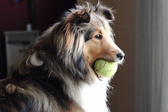 Willow And Her Ball