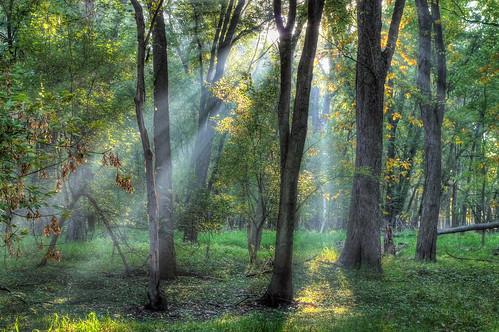 autumn fall october michigan lansing hdr rivertrail