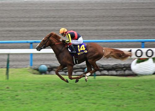 2011 菊花賞 オルフェーヴル最後の直線