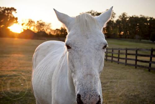 horse canon20d whitehorse unioncounty horsesunset whitehorsesunset unioncountynorthcarolina unioncountync topazdenoise brycehoover 3clixpix