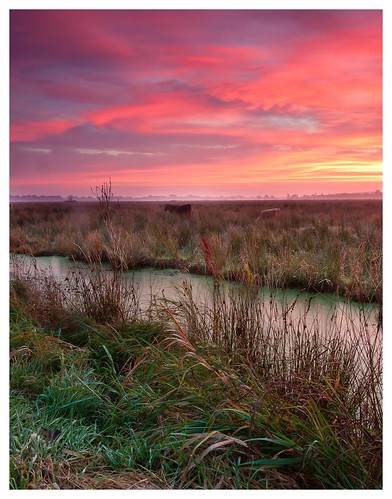 sunrise cows sonnenaufgang kühe