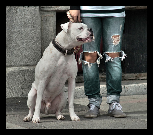 Bad Bad Dog