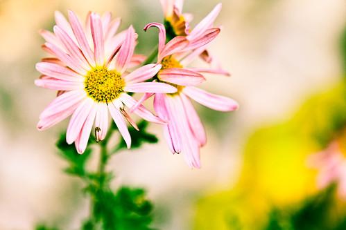 November Flowers