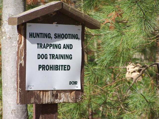 Hunting Dog Training Houston