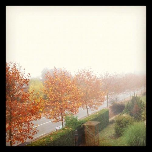 民宿主人看了看窗外後說道:霧散去之後,會變得溫暖一些;你們運氣很好,往年這時候已經很冷了。