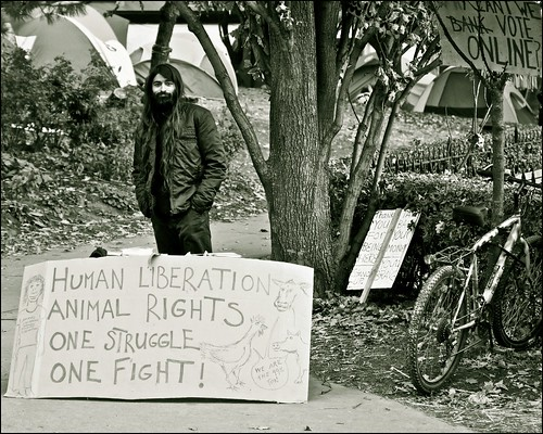 occupy toronto .......