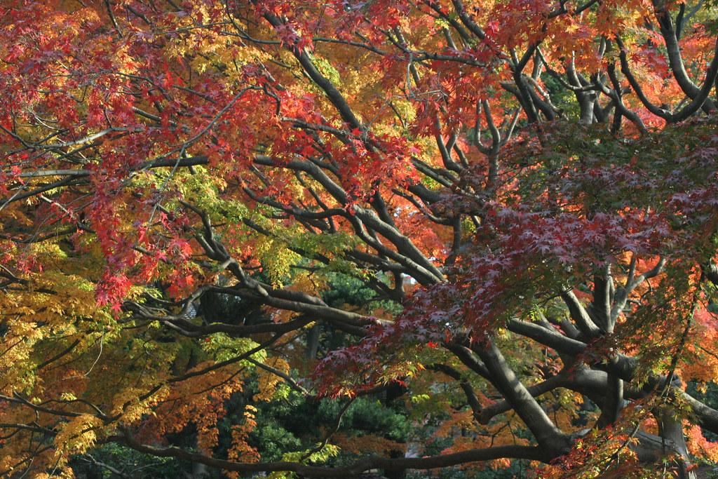 Rikugien Garden (六義園)Tokyo