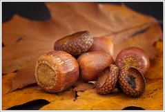 chestnut(1.0), nuts & seeds(1.0), hazelnut(1.0), produce(1.0), food(1.0),